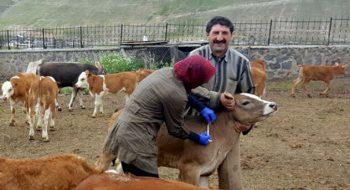 Türkiye'de Veterinerlik Nasıl ve Ne Zaman Başladı?