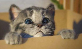 Mükemmel Kedi Fotoğrafları Nasıl Çekilir | 19 İpucu