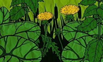 Vahşi Doğada Yenilebilecek Yabani Otlar-Bitkiler