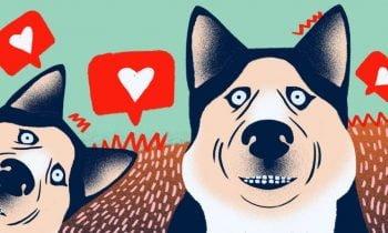 Mükemmel Köpek Fotoğrafları Nasıl Çekilir | 7 İpucu
