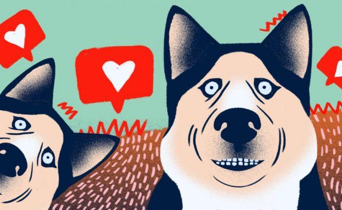 Mükemmel Köpek Fotoğrafları Nasıl Çekilir   7 İpucu